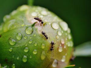 обработка квартиры от муравьев