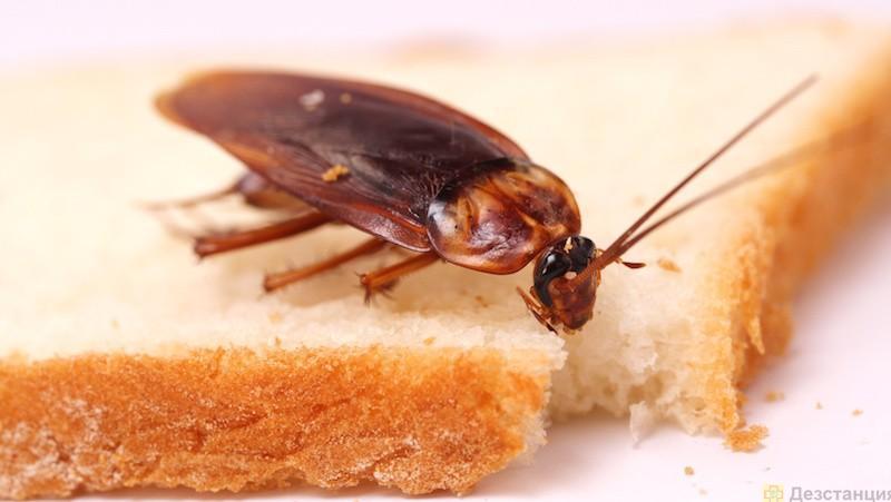 Избавляемся от рыжих тараканов
