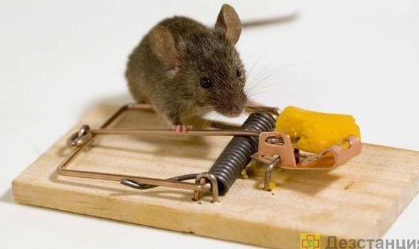 как избавиться от домашних мышей